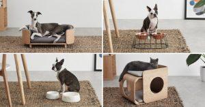 Lindos muebles para tu mascota
