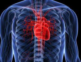 radiografía de un corazón saludable