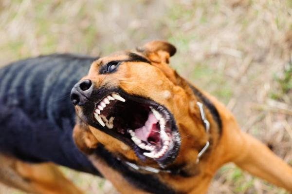 que es la rabia canina