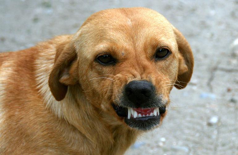 rabia canina que hacer